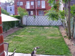 The Apartments at 31-81 Backyard redesign phase 1 cleanup